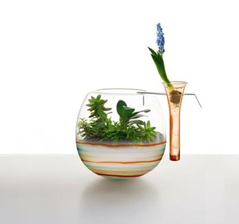 Vase Physis