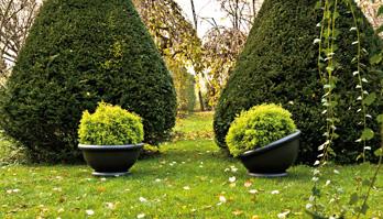 Pot Kew